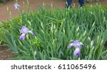 parks and flowers   Shutterstock . vector #611065496