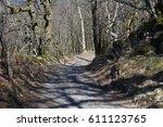 forest walk | Shutterstock . vector #611123765