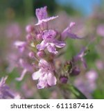 wildflowers close up. thyme | Shutterstock . vector #611187416