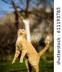 Stock photo funny red cat jumping on green grass 611193785
