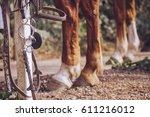 equestrian sport equipment | Shutterstock . vector #611216012