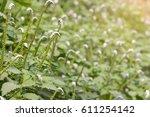 Grass  Herbs  Plants...