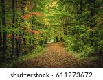 Green Nature Landscape During...