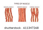 types of muscle | Shutterstock .eps vector #611347268