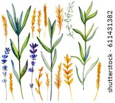 watercolor lavender flowers ... | Shutterstock . vector #611431382