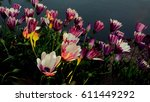 violet flower | Shutterstock . vector #611449292