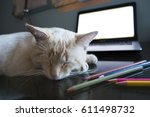 Stock photo white red point siamese cat sleeping on the table near laptop and colored pencils cat sleeping on 611498732