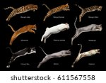 Stock photo group of cats in jumping nine lives with name of breed on isolated black background side view 611567558