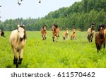 herd of horses galloping in... | Shutterstock . vector #611570462