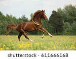 chestnut horse with flower... | Shutterstock . vector #611666168
