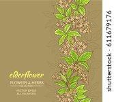 Elder Flower Branches Vector...