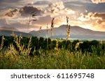Wild grasses during sunset in the Colorado Front Range - stock photo