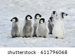Stock photo emperor penguins chicks 611796068