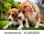 a couple beagles having fun... | Shutterstock . vector #611802635