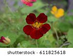 red nasturtium  | Shutterstock . vector #611825618