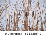 cattails in front of snow | Shutterstock . vector #611838542
