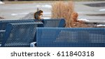 squirrel on bench  | Shutterstock . vector #611840318