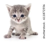 small gray kitten isolated on... | Shutterstock . vector #611872556