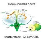 Anatomy Of An Apple Flower....