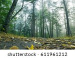 beautiful magic forest after... | Shutterstock . vector #611961212