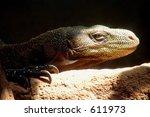 komodo dragon stepping into...   Shutterstock . vector #611973