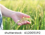 child hand with rice field | Shutterstock . vector #612005192