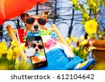 jack russell dog relaxing on a... | Shutterstock . vector #612104642