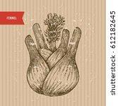 fennel bulb vintage engraved... | Shutterstock .eps vector #612182645