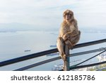 Monkey Relaxes And Poses On...