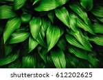 greenery background made of... | Shutterstock . vector #612202625