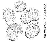 raspberry graphic black white... | Shutterstock .eps vector #612208532