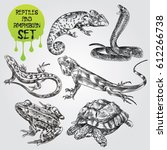 set of hand drawn reptiles and... | Shutterstock .eps vector #612266738