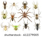 Spiders. Close Up. Isolated On...