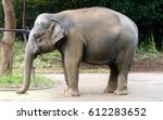 asian elephant in the zoo | Shutterstock . vector #612283652