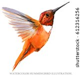 hummingbird watercolor... | Shutterstock . vector #612316256