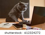 Stock photo cat businessman at a table near the laptop with glasses 612324272