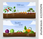healthy food horizontal banners ... | Shutterstock .eps vector #612335696