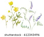watercolor set  botanical... | Shutterstock . vector #612343496