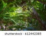 penang national park  taman... | Shutterstock . vector #612442385