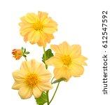 beautiful bouquet of yellow... | Shutterstock . vector #612547592