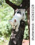 cute white afraid kitten... | Shutterstock . vector #612621128
