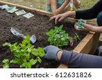 garden | Shutterstock . vector #612631826