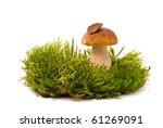 Beautiful Boletus Mushroom On...
