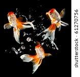 Stock photo goldfish isolated on a dark black background 61270756