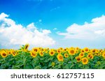 Vibrant Sunflowers Plant Farm...