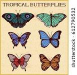 vector illustration of tropical ... | Shutterstock .eps vector #612790532