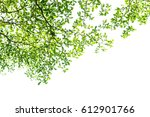 green leaves isolated on white... | Shutterstock . vector #612901766