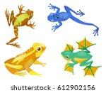 frog cartoon tropical animal...   Shutterstock .eps vector #612902156