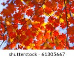 Bright Autumn Leaves In The...
