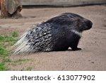 porcupine | Shutterstock . vector #613077902